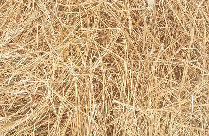 rust brown pine straw needles